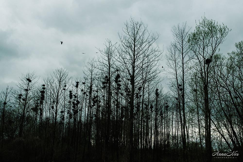 fotografia-bialystok-2017-emi-50