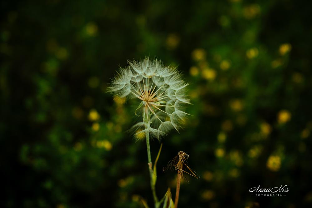 fotografia-slubna-2017-pati-2